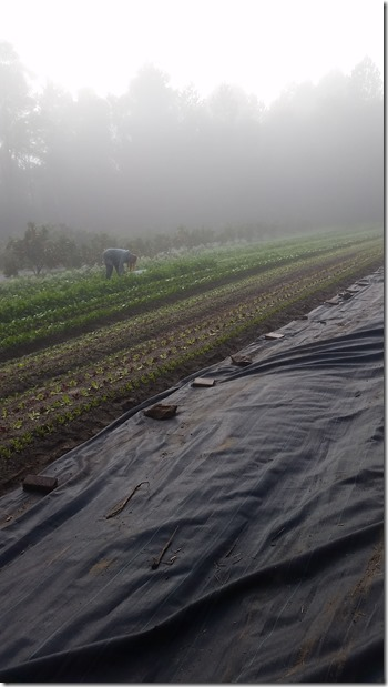 Misty, moisty mornings up here on the plateau!